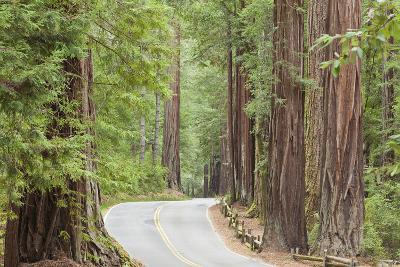 Road Through Redwoods, Big Basin Redwoods State Park, California, USA