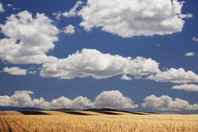 Landscape of Wheat Fields in Western Part of State, Colorado, USA