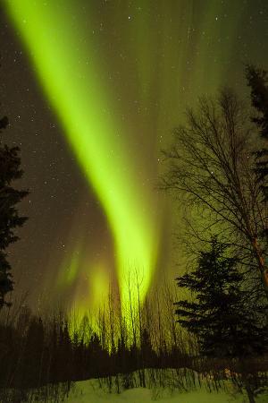 View of Northern Lights and Stars, Chena Hot Springs, Alaska, USA