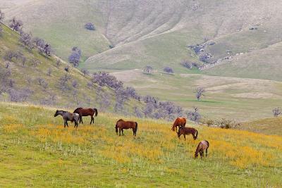 Horses in Meadow, Caliente, California, USA