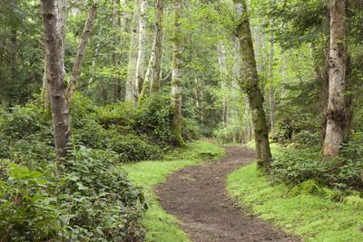 Trail Through Woods, Stuart Island, San Juan Islands, Washington, USA