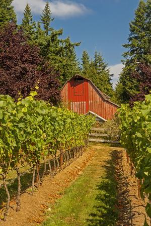 Winery and Vineyard on Whidbey Island, Washington, USA