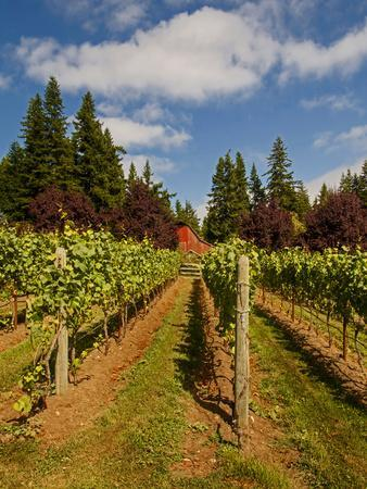 Winery and Vineyard on Whidbey Island, Washington, USA