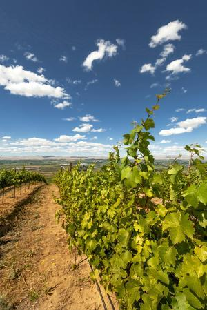 Yakima Valley Vineyard in Eastern Yakima Valley, Washington, USA