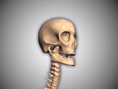 Conceptual Image of Human Skull and Spinal Cord