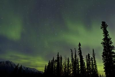 Aurora Borealis over Trees, Yukon, Canada