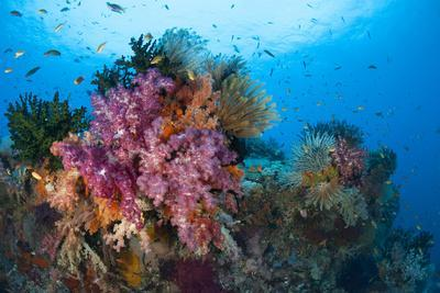 Colorful Soft Corals Adorn the Stunning Reefs of Southern Raja Ampat