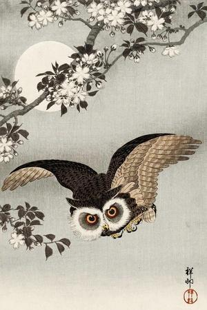 Scops Owl Flying under Cherry Blossoms