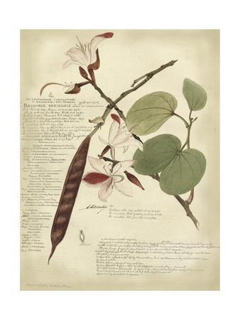 Descube Botanical III