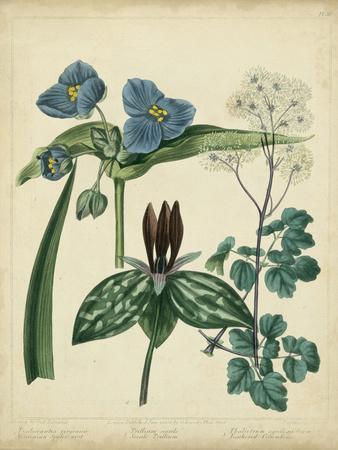 Cottage Florals V