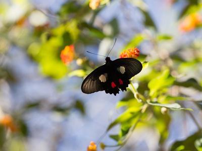 A Beautiful Butterfly in Iguazu National Park