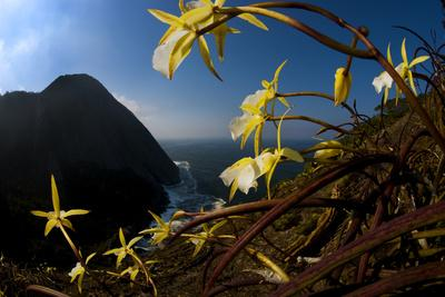 Orchids on Granite Cliffs Above the Atlantic Ocean in Serra Da Tiririca State Park