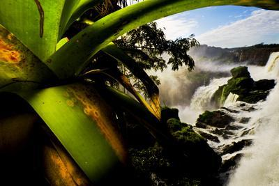 Bromeliad Leaves and Rainforest Waterfalls in Iguazu National Park