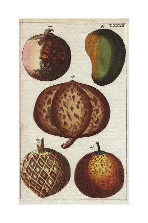 Varieties of Tropical Fruits- Mango, Mangosteen, Mammee Apple, Sapodilla and Custard Apple