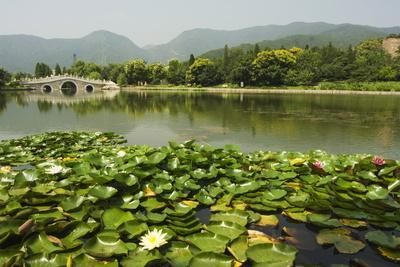 Lily Pads and a Arched Stone Bridge in Beijing Botanical Gardens, Beijing, China, Asia