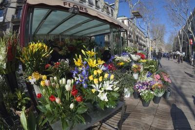Flower Stall on Las Ramblas, Barcelona, Catalunya, Spain, Europe