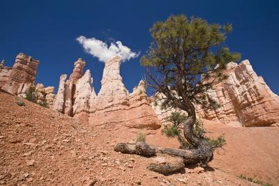 Bryce Canyon, Bryce Canyon National Park, Utah, United States of America, North America