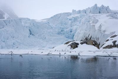 Gulls Fly Up in Front of Glacier, Spitzsergen, Svalbard, Norway, Scandinavia, Europe