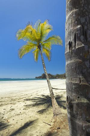 Beautiful Palm Fringed White Sand Playa Carrillo