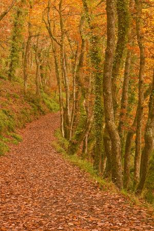 Hannicombe Wood Near to Fingle Bridge