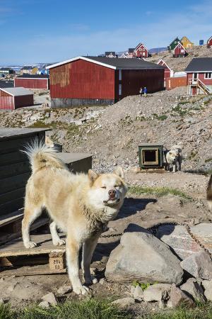 Inuit Village and Sled Dog House
