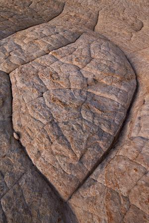 Erosion Pattern in Navajo Sandstone