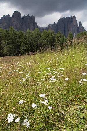 Meadow and the Rosengarten Peaks in the Dolomites Near Canazei, Trentino-Alto Adige, Italy, Europe