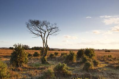 The Heathland of the New Forest at the End of a Winter's Day