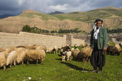 Shepherd with His Herd of Sheep in Ahmedawa on the Border of Iran