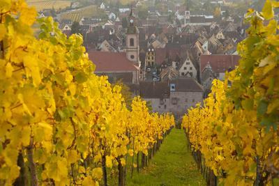 View of Riquewihr and Vineyards in Autumn, Riquewihr, Alsace, France, Europe