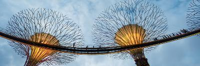 Elevated Walkway Among Supertrees, Gardens by the Bay, Singapore
