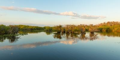 Reflection of Trees in a Lake, Anhinga Trail, Everglades National Park, Florida, USA