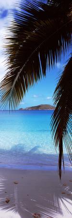 Palm Tree on the Beach, Maho Bay, Virgin Islands National Park, St. John, Us Virgin Islands