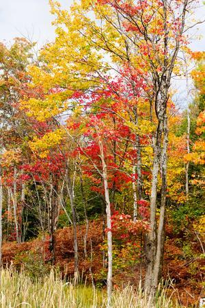 Colorful Trees in the Forest During Autumn, Muskoka, Ontario, Canada