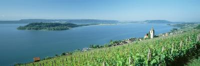 Vineyard Near a Village, Lake Biel, Ligerz, Canton of Bern, Switzerland