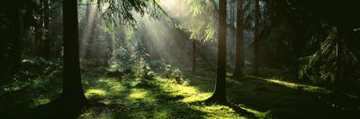 Forest Uppland Sweden