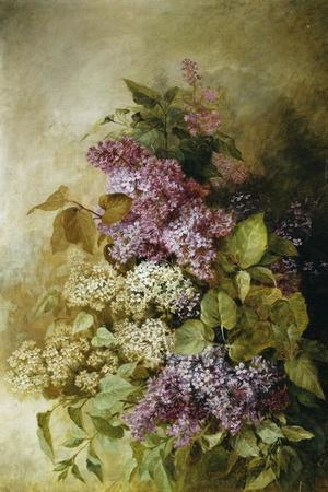A Study of Lilac
