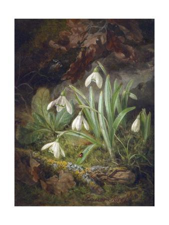 Forest Floor with Snowdrops