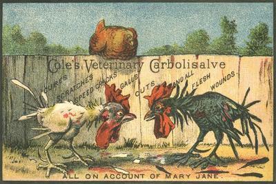 Cole's Veterinary Carbolisalve Trade Card