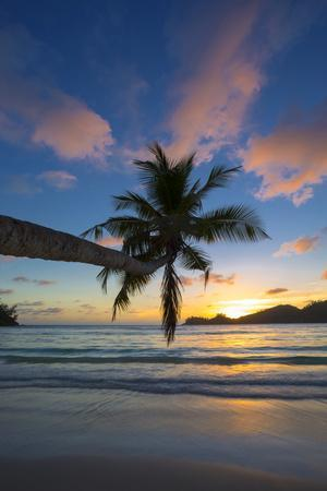 Palm Trees and Tropical Beach, Southern Mahe, Seychelles
