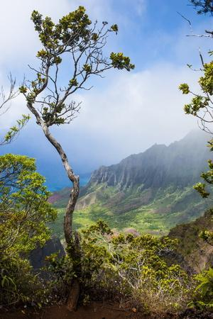 Kalalau Lookout over the Napali Coast from the Kokee State Park