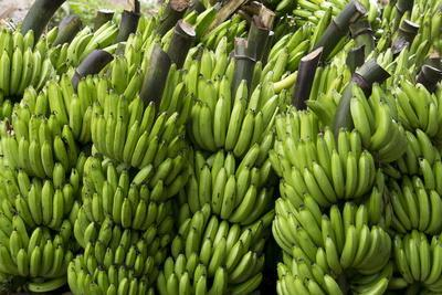 Freshly Cut Bananas, Peru, South America