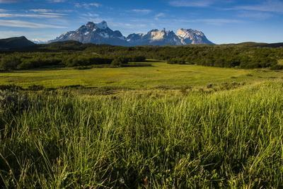 Green Grass, Torres Del Paine National Park, Patagonia, Chile, South America