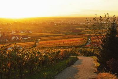 Vineyard Landscape and Buehlertal Village