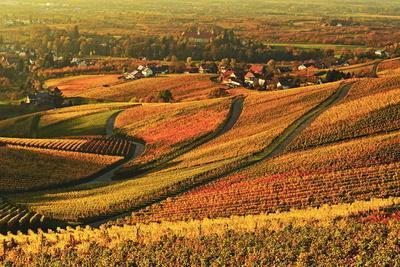 Vineyard Landscape and Blumberg Village