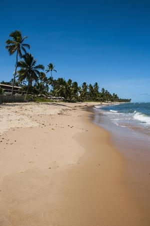 Tropical Beach in Praia Do Forte, Bahia, Brazil, South America