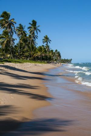 Tropical Beach in Praia Do Forte, Bahia, Brazil, South America