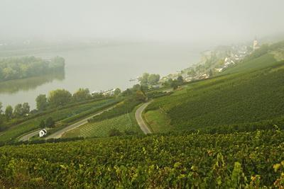Morning Fog over the River Rhine, Near Lorch, Hesse, Germany, Europe