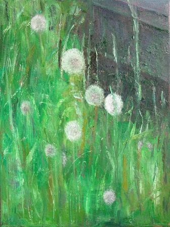 Dandelion Clocks in Grass, 2008