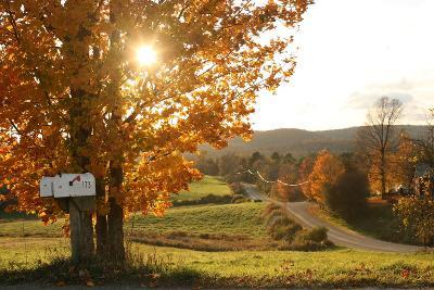 Sunlight Shines Through the Fall Foliage on a Tree Next to a Country Lane